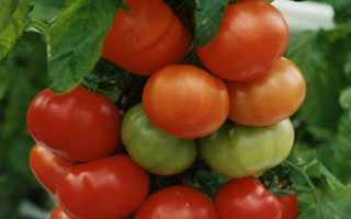 """Томат """"Красная стрела F1"""": характеристика и описание томатного гибрида с фото, отзывы об урожайности"""