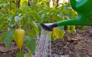 Подкормка перца в открытом грунте: чем удобрять после посадки растения народными средствами и готовыми удобрениями? верхнее удобрение острого и сладкого перца