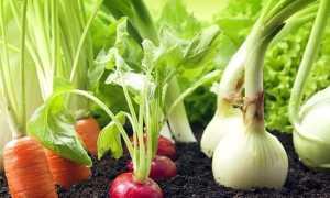 Что посадить после перца на следующей год: после каких культур его можно сажать, а какие предшественники навредят, севооборот для сладкого и острого перца