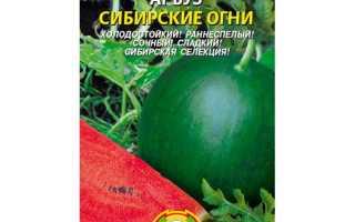 Выращивание арбузов в Подмосковье в открытом грунте: как вырастить правильно, какой сорт выбрать (Сибирские огни и т.д.), советы по теме