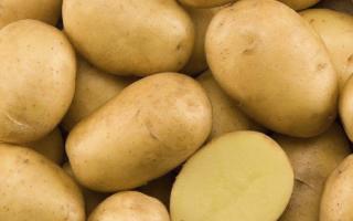 Картофель Маделина: описание сорта, фото, отзывы о вкусовых качествах и сроках созревания, особенности ухода, выращивания и хранения, характеристика урожайности