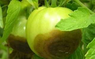 Как бороться с фитофторой в открытом грунте: лучшие средства против фитофторы, инструкция, как правильно опрыскивать помидоры