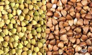 Какая гречка лучше темная или светлая: какая самая полезная, как покупать крупу правильно, чем отличается зеленая и коричневая