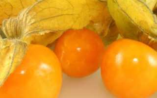 Земляника физалис: выращивание и уход фото и видео