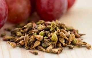 Виноградная косточка: состав, польза и вред для здоровья, применение в народной медицине, способы употребления