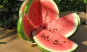 Арбуз Атаман (f1): обзор гибридного сорта, описание и характеристика, фото поспевших плодов