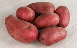 Картофель красивая: описание разнообразия, преимуществ, дат и условия посадки, семена семян, правила выращивания, отзывы