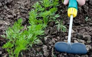 Морковь не растет: чем подкормить в открытом грунте, чтобы они не были мелкими, минеральные удобрения и сидераты после всходов весной и летом, настой зелени