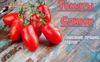 """Томат """"Сливка"""": характеристика и описание сорта помидор с фото, урожайность и отзывы, желтая и красная сливка"""