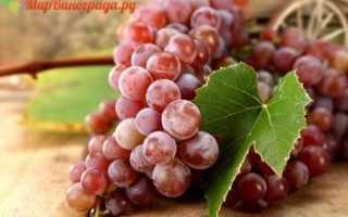Столовые сорта винограда (десертные): что это значит, какие самые лучшие, как их выбирать и выращивать