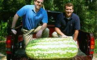 Самая большая морковка в мире: рекорды России и мира, кто и когда вырастил самую огромную и длинную морковь