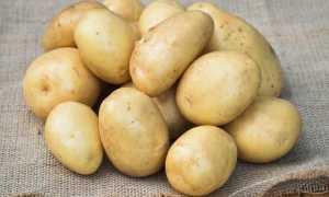 Картофель Уладар: описание сорта, фото, отзывы о картошке, характеристика и вкусовые качества урожая