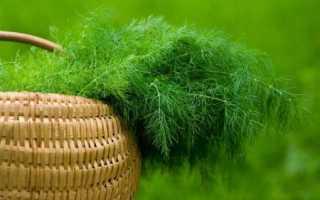 Укроп сушеный: польза и вред, как правильно заготовить сухой укроп, применение зелени и стеблей в народной медицине и кулинарии