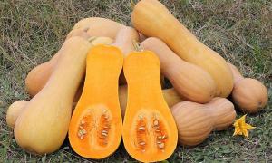 Тыква Ананасная: характеристика и описание сорта с ананасовым привкусом, фото кустов и полученного урожая, инструкция по выращиванию
